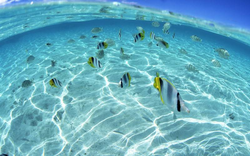 合肥真正的硅藻泥多少钱一平米相关图片